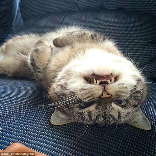 中身は普通のおちゃめな猫。