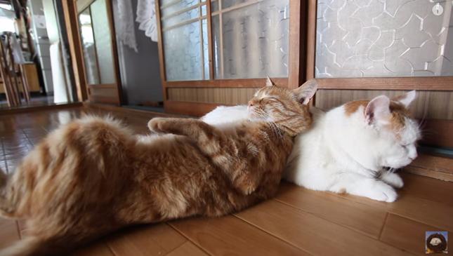 なんという羨ましい猫まくら。