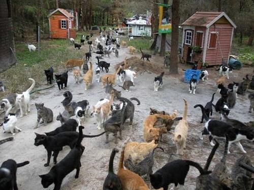 猫の村!!!??