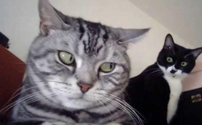 意識しあう猫たち。