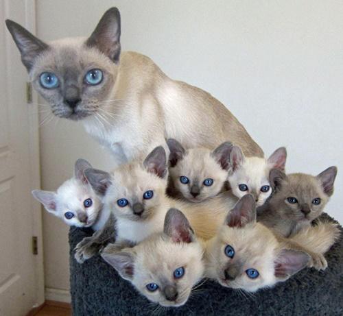 ソックリ家族。