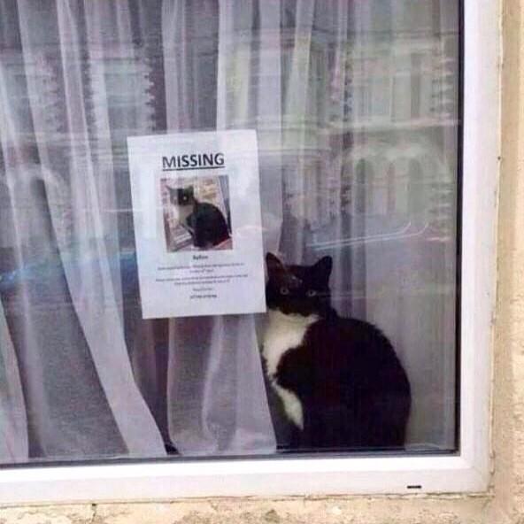 迷子猫と猫さがしてますの張り紙。