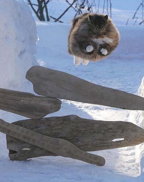 飛ばないモフモフはただの猫。