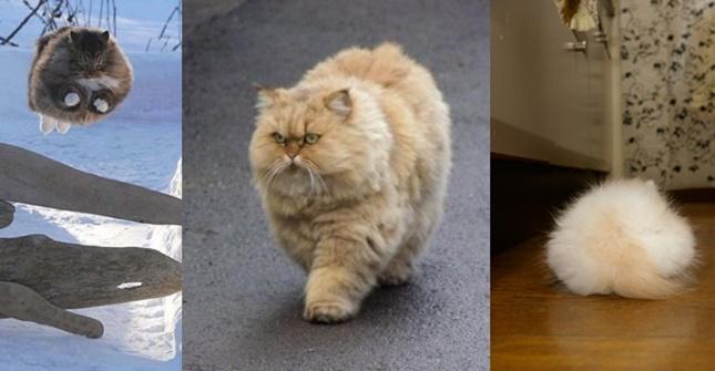 モフモフ猫まとめ