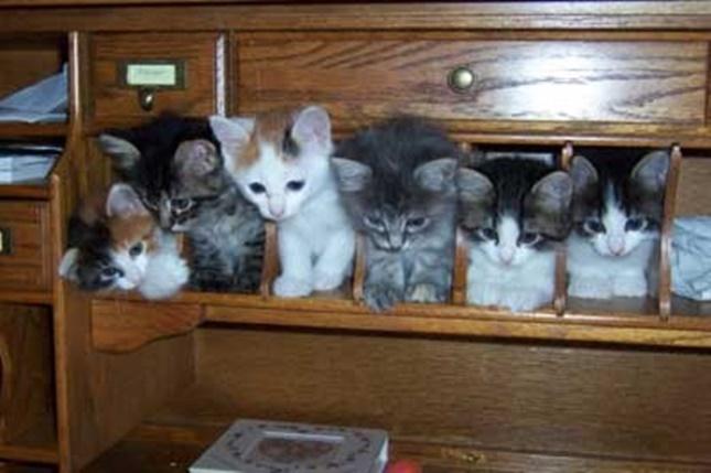 子猫マンション。