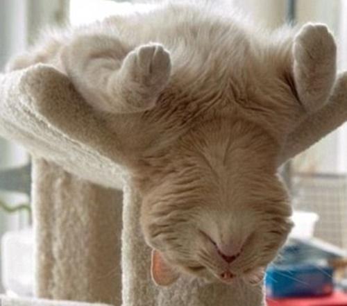 首が心配な寝相。