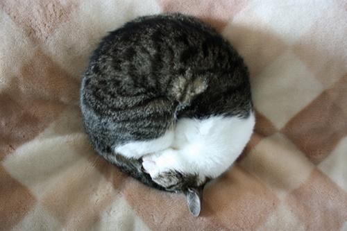 アンモナイト寝。