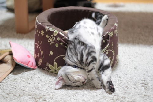 一人バックドロップ寝。