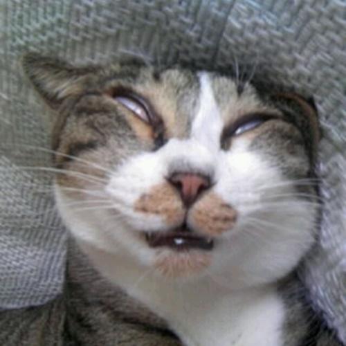 ある意味素晴らしい寝顔。