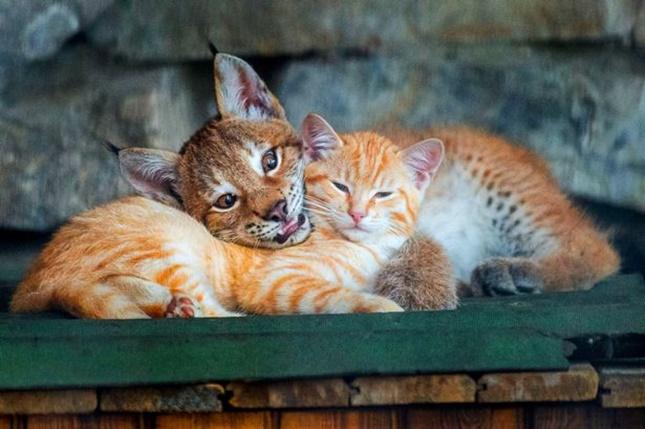 大きくなっても母猫大好き!