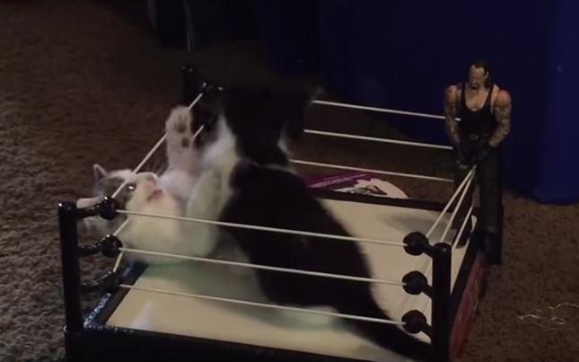ワールド子猫プロレスリング。