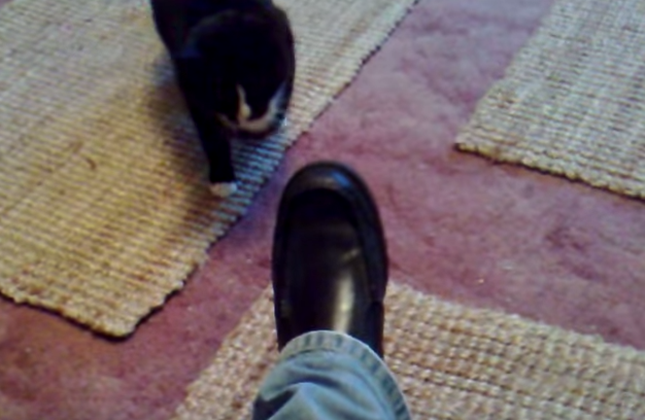 なぜ革靴に・・・