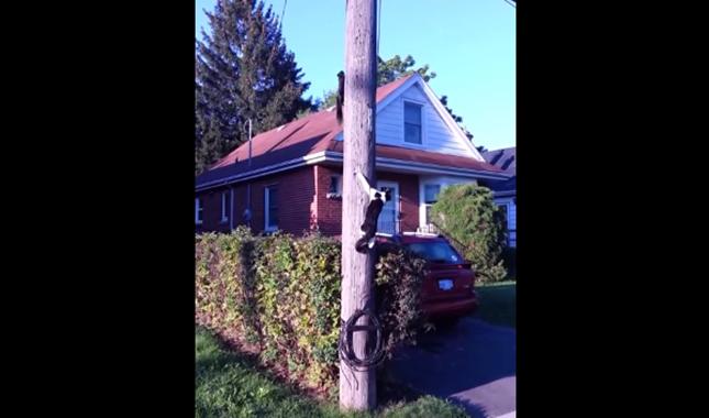 猫の隙をついて登るリス。