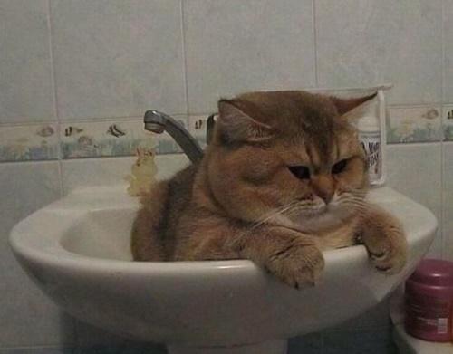 不思議な表情。