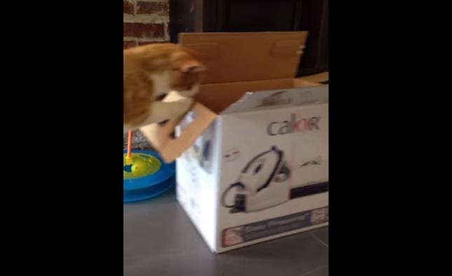 なぜか箱を押してしまう猫。