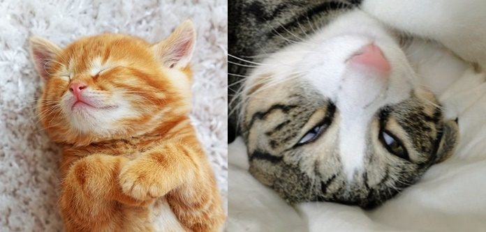 猫の寝顔大集合