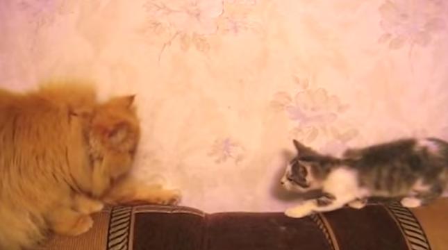 子猫が成猫の元へ向かいますが・・・