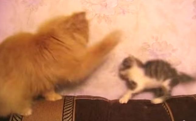 強烈な猫パンチをくらってしまいます。