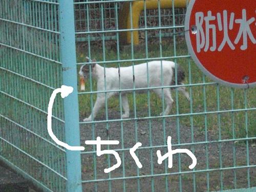 tikuwa2001cat