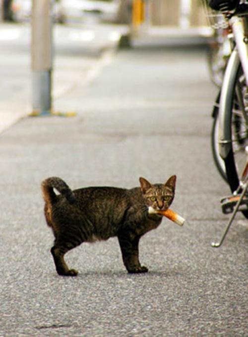 tikuwa2003cat