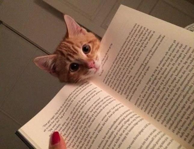 子猫が可愛くて読書に集中出来ない・・・