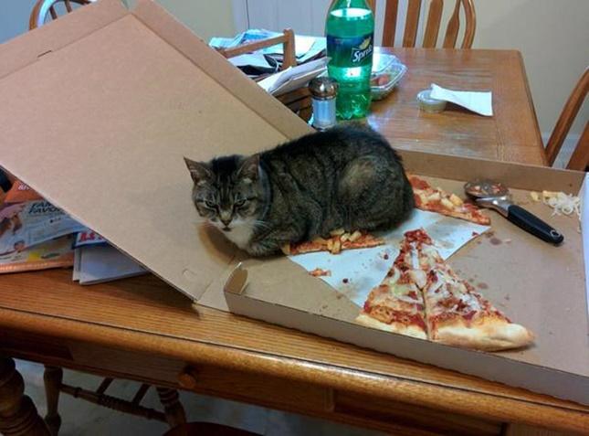 ピザに乗る猫。