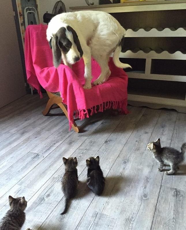 犬を追い詰める子猫たち。