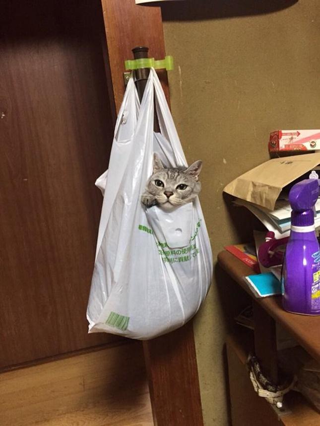 ビニール袋に入る猫。