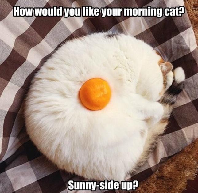 目玉焼きのような猫。