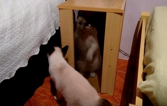 ガラスをこすり出してとアピールする猫。