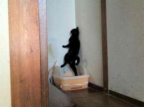 トイレで何してんの?