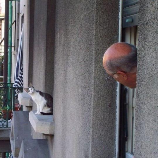 ご近所挨拶する猫とおじさん。