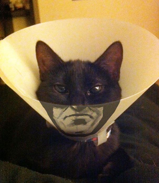 アートなカラーをつける猫。