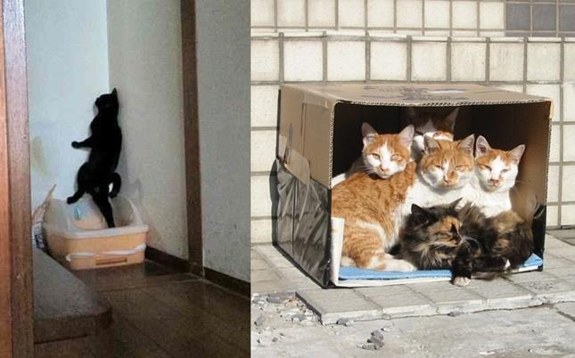 ツッコミたくなる猫達の画像。