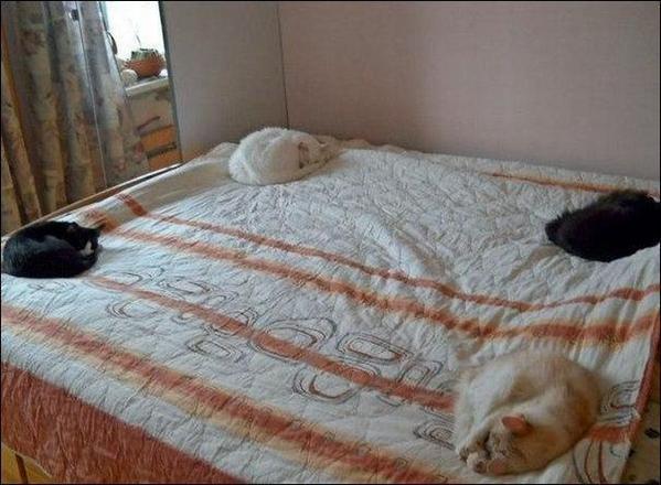 猫達にベッドを封印される。