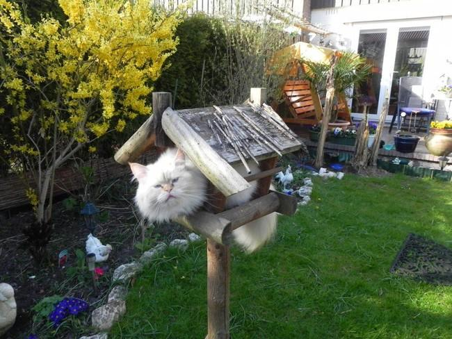 快適猫ハウス?
