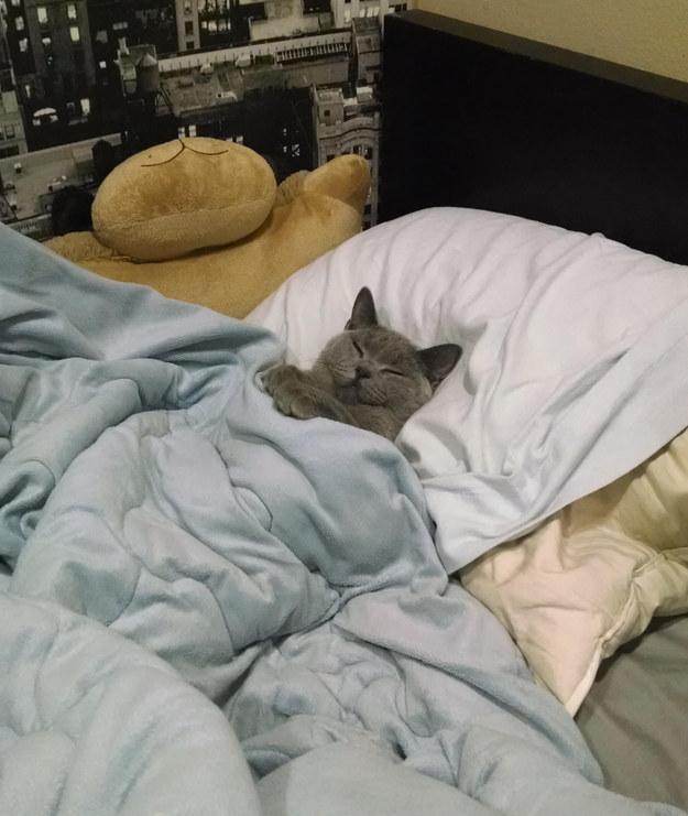 満足気な表情でベッドを独占する猫。