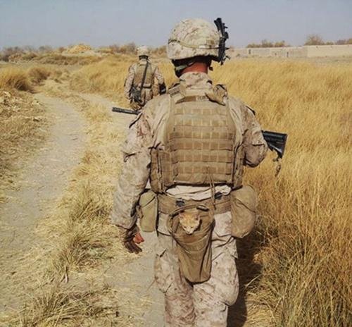 子猫と移動する兵士。