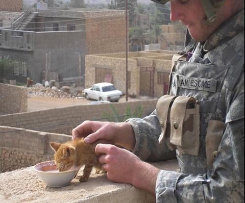 子猫にミルクをあげる兵士。