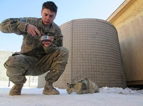 猫のご飯の時間。