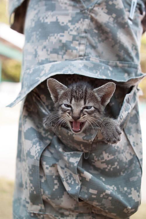 兵士のポケットに子猫。