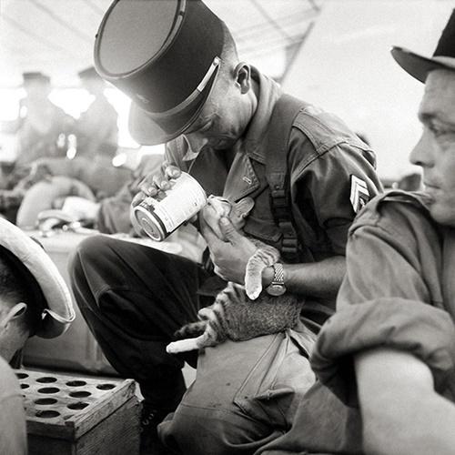 ご飯を猫にあたえるフランス兵。