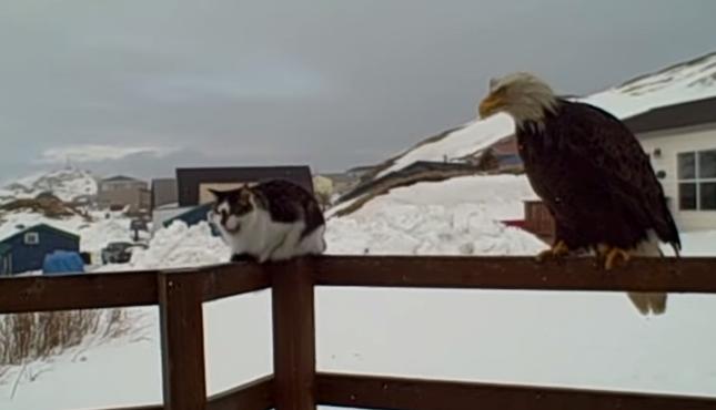 猫と鷲とキツネ。