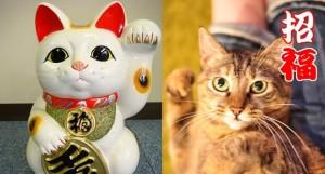 リアル招き猫!!