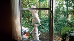 写真集「庭猫」