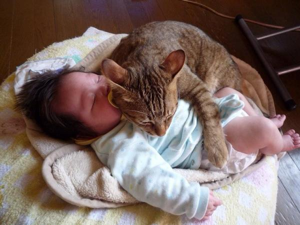 赤ちゃんで暖をとる猫。