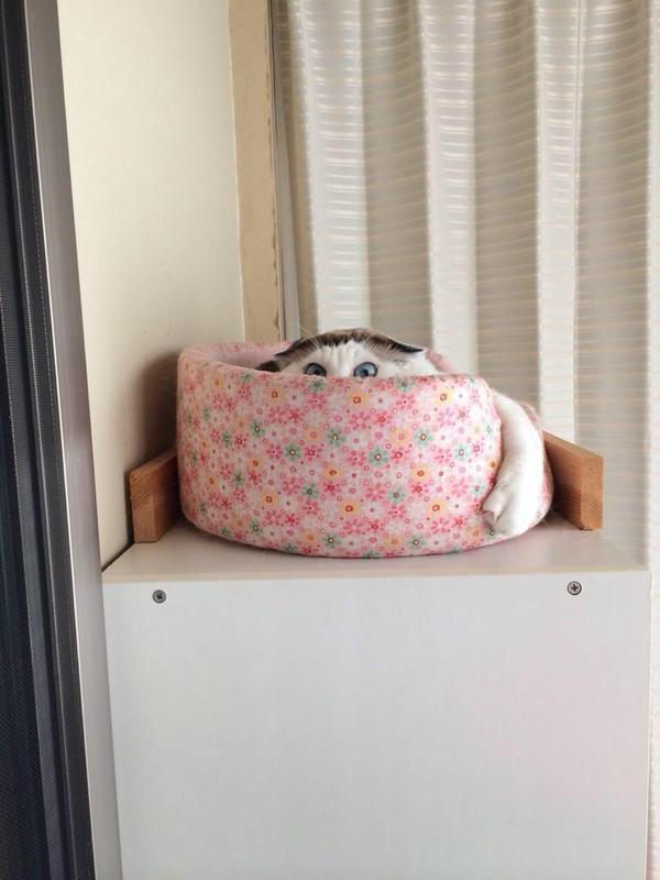 のぞき見猫。