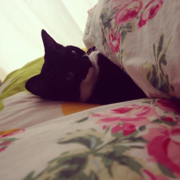 添い寝をいざなう猫。