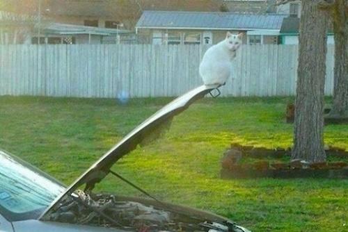 ボス猫は常に最先端。
