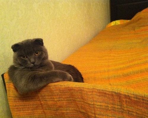 眼力がハンパないボス猫。